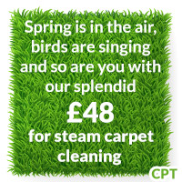 dry steam carpet cleaning agencies